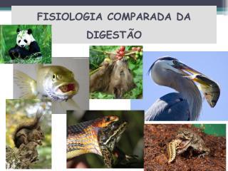 Digestão 1.pdf